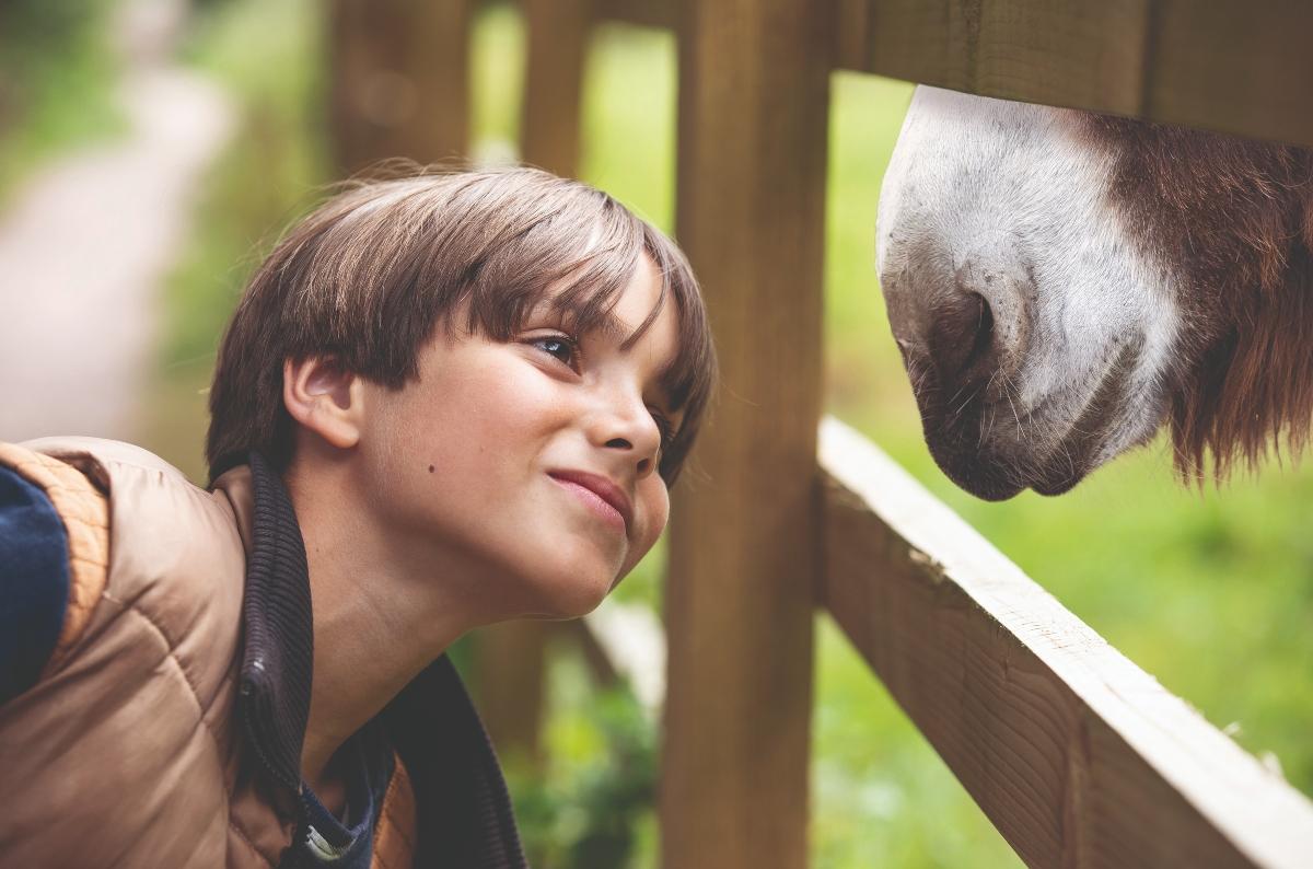 Boy enjoys a special moment meeting a donkey