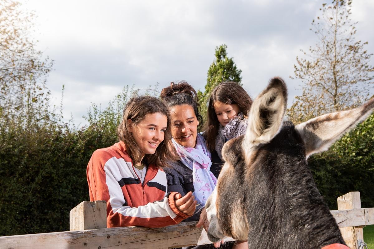 Family enjoys meeting friendly donkey