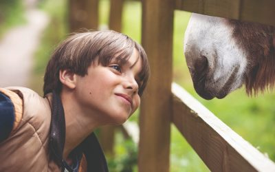 Boy enjoys a special moment meeting a donkey